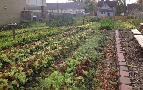 City farmers bring fresh produce to the city