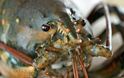 Lobster antennules inspiring robotic 'noses'