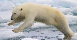 Photo courtesy National Park Service