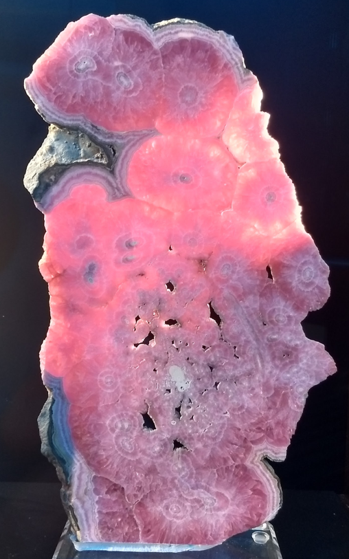A+bright+pink%2C+sliced+rhodochrosite+stalactite+from+Argentina+is+on+display+in+the+Calvin+Bruce+Dice+Mineralogical+Museum.+Photo+by+Melissa+Sorrentino.