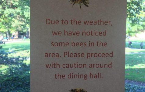 Bee-ware of your surroundings