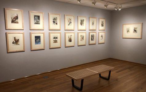 The Details of Stillness: John James Audubon at the Center Art Gallery